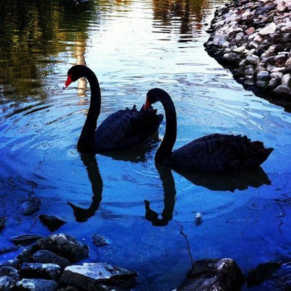 izmir doğal yaşam parkı hayvanları