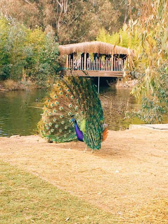 izmir doğal yaşam parkı