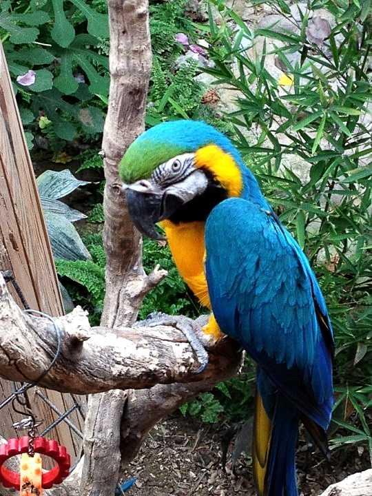 izmir doğal yaşam parkı ara macaw