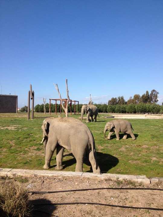 izmir doğal yaşam parkı filler