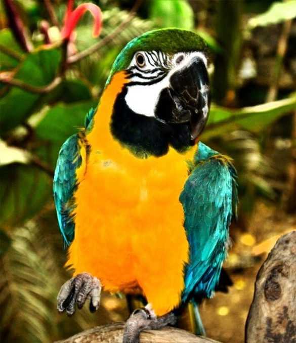 izmir doğal yaşam parkı papağan