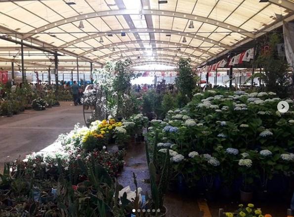 Antalya Çiçek Festivali