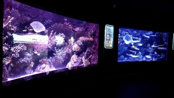 Antalya Akvaryum Balıklar