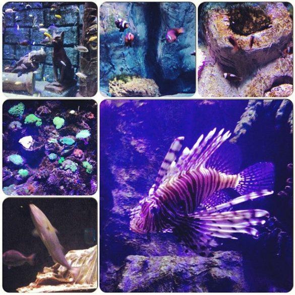 Antalya Akvaryum Balıklar Galerisi