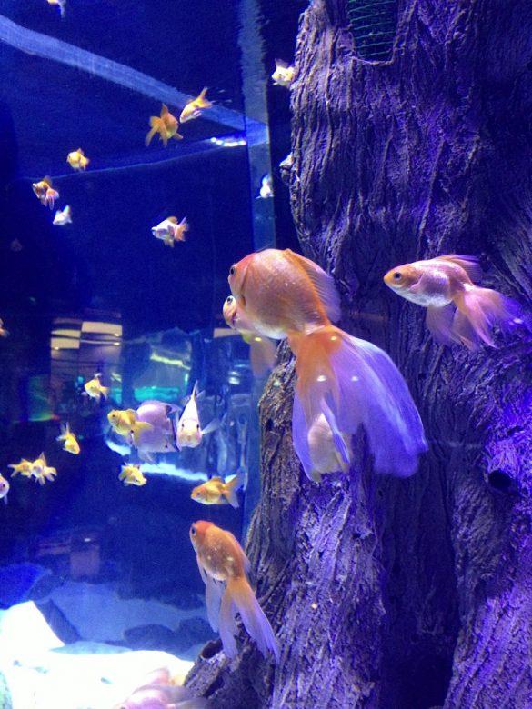 Antalya Akvaryumu - Aquarium