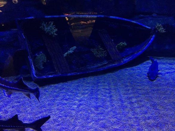 Antalya Akvaryumu - Aquarium Balık