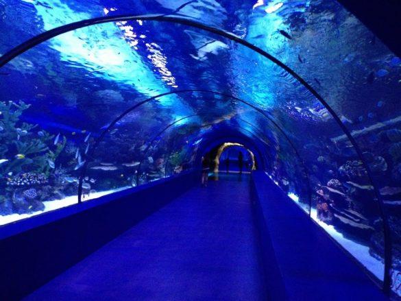 Antalya Konyaaltı Akvaryumu - Aquarium