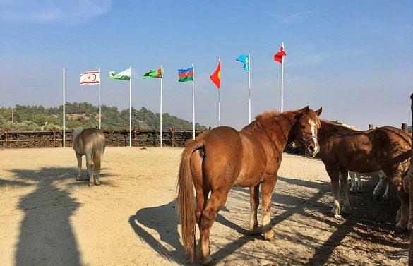 Kazak Vadisi - Alaş Kımız At Çiftliği