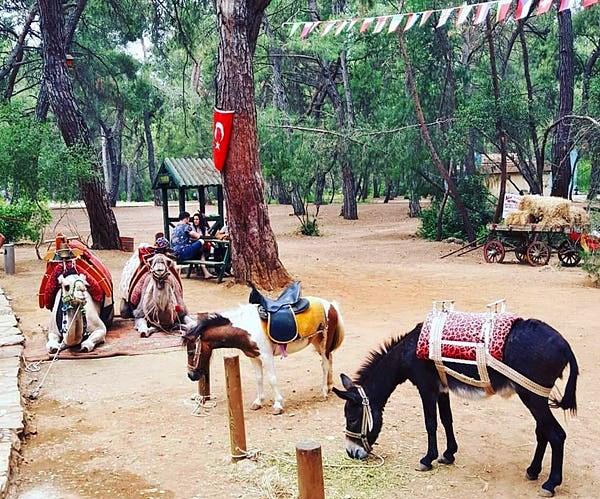 Kurşunlu Şelalesi ve Tabiat Parkı Kahvaltı atlar
