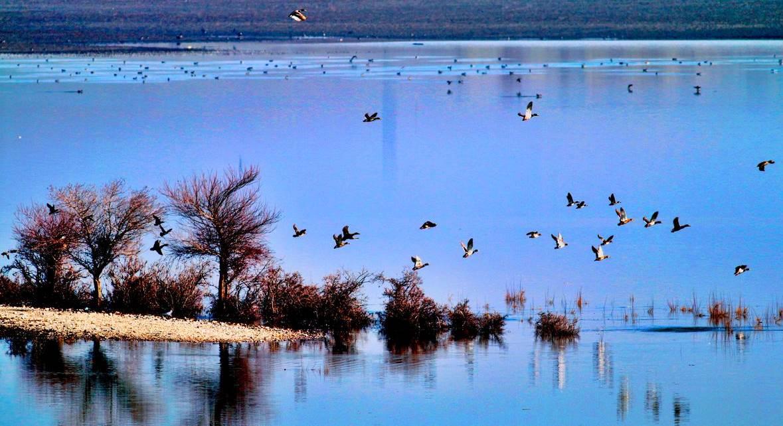 Uluabat Kuş Cenneti