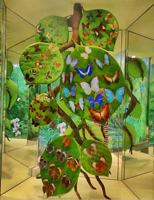 Konya Tropikal Kelebek Bahçesi Kelebek Çeşitleri