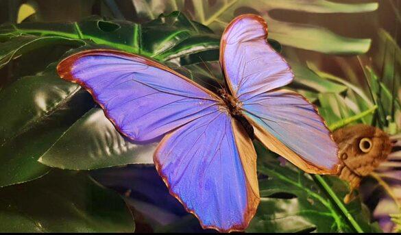 Kelebek Bahçesi