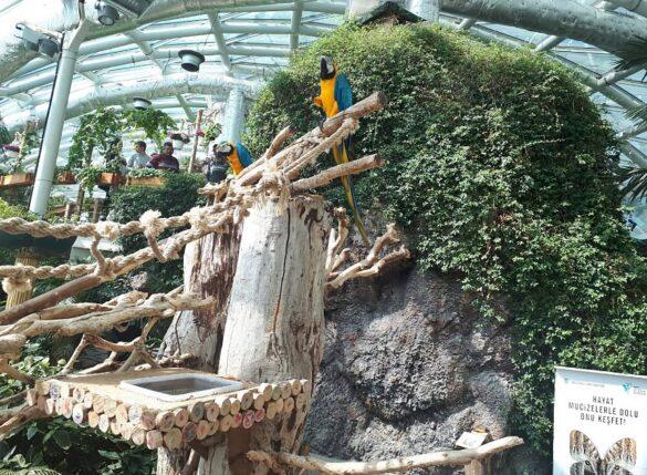 Kelebek Bahçesi Ara Macaw