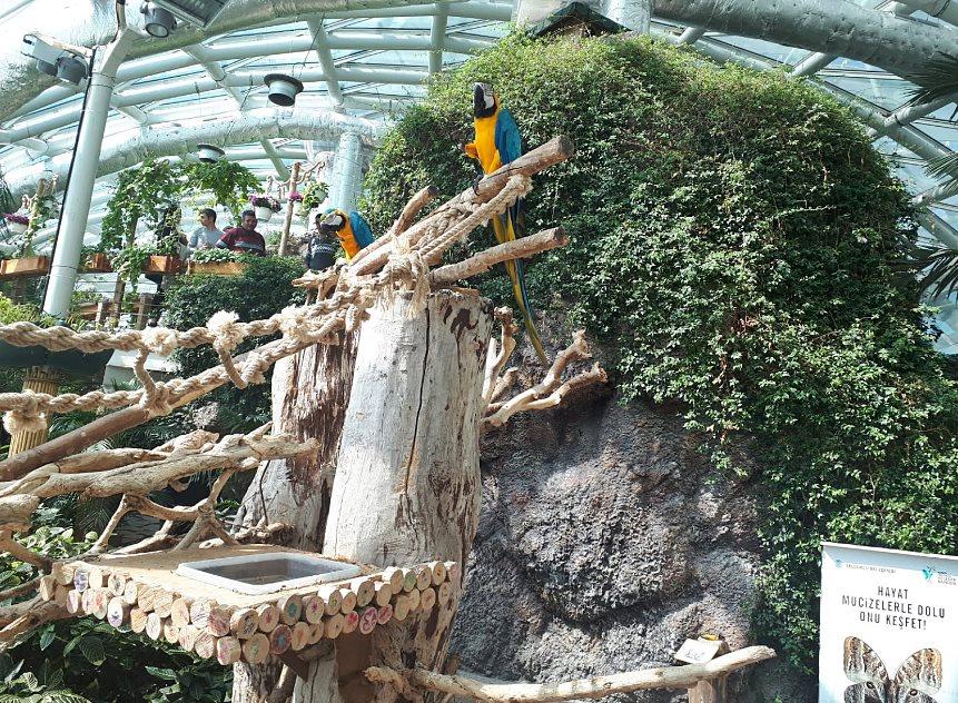 Kelebek Bahçesi Ara Macaw Papağanı